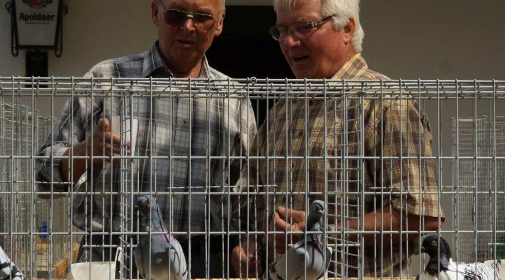 Taubenkäfige und zwei diskutierende Männer